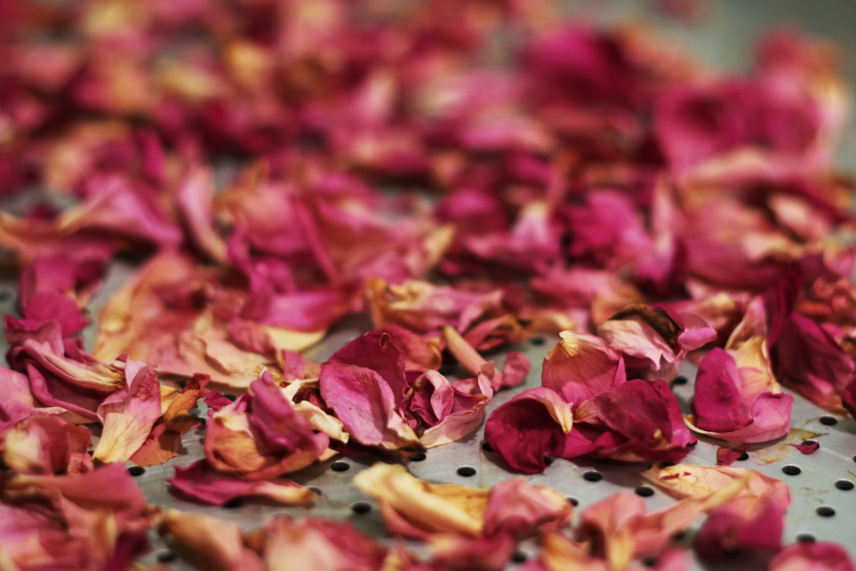 Drying Rose Petals 4 - Our Urban Farmstead