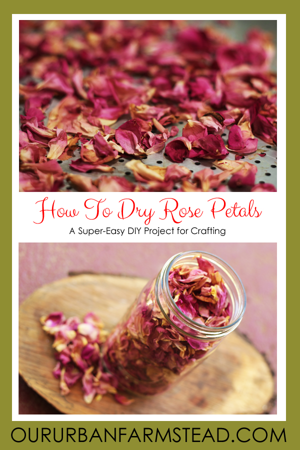 How To Dry Rose Petals - Our Urban Farmstead